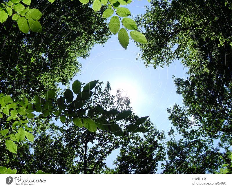 sun reflex °2 Tree Reflection Summer Sky Sun