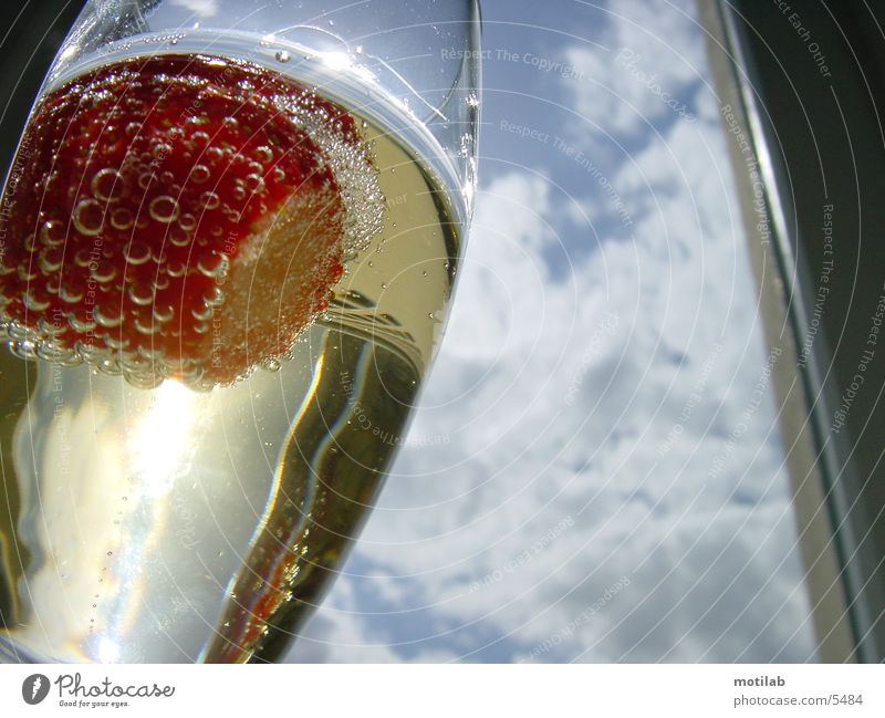 strawberry in champagne glass Sparkling wine Photographic technology Strawberry Glass Surrealism Sun Light (Natural Phenomenon)
