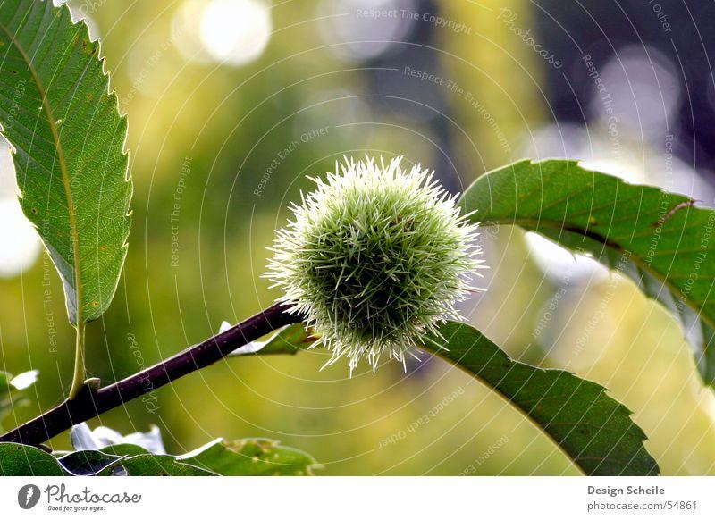 Nature Green Flower Meadow Garden Thorny