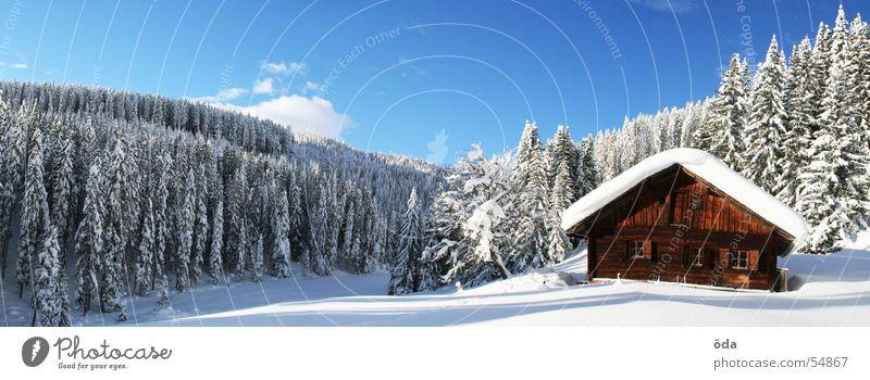 Tree Sun Winter Forest Cold Snow Large Hut Panorama (Format) Alpine pasture Deep snow