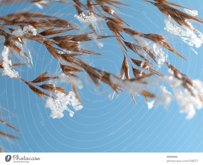 Sky Sun Blue Winter Snow Brown Wind Soft Delicate Sewing thread Fragile Snowflake Spider's web Oats