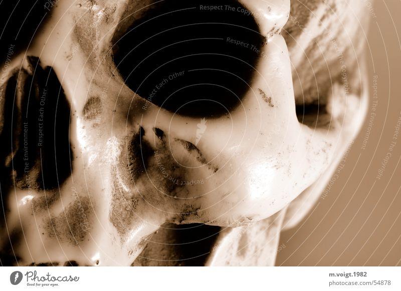 skull Close-up Detail Artificial light Head Eyes Skeleton Death's head Cheek Sculpture Kitsch Odds and ends Souvenir Dark Creepy Trashy Brown Nasal bone Gypsum