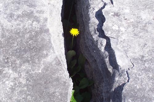 david & goliath Dandelion Cervice Rock the burren Power