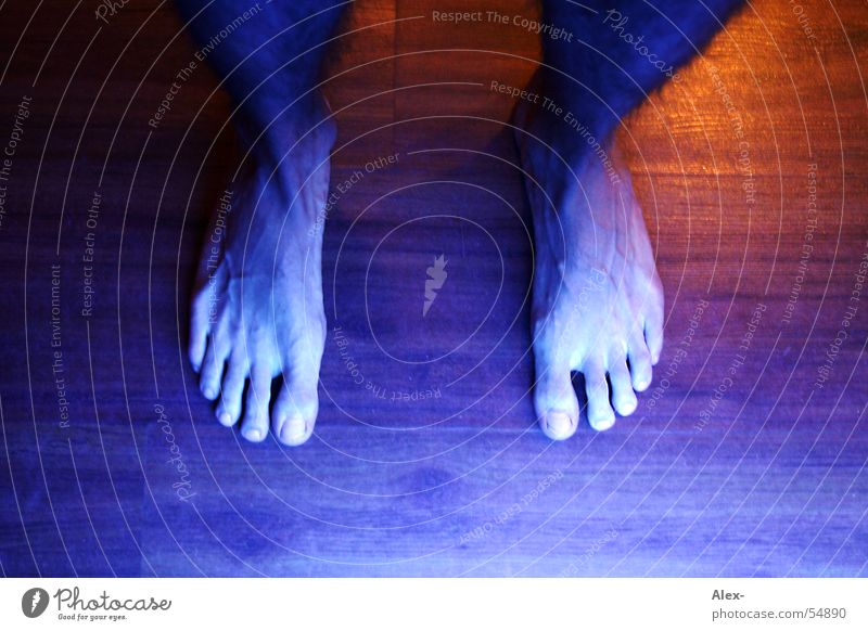 blue foot Stand Toes Barefoot Vessel Light Wood Parquet floor Feet Legs Walking Above Floor covering