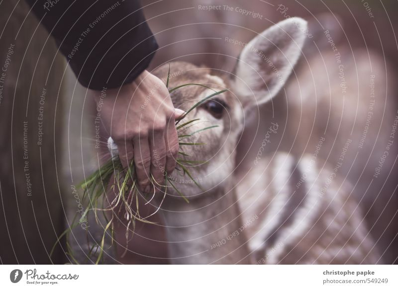 Don't feed the troll - feed bambi! Agriculture Forestry Feminine Hand 1 Human being Field Animal Farm animal Wild animal Animal face Zoo Petting zoo Roe deer