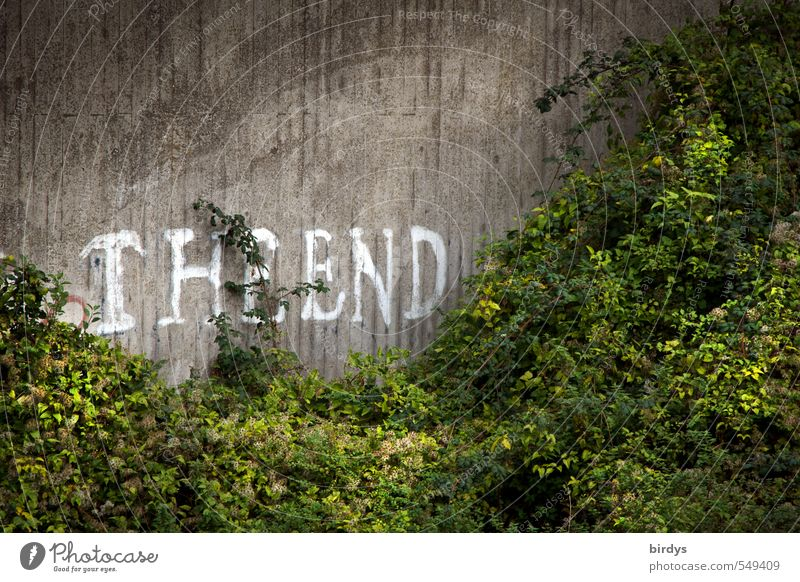 ..of LD is the beginning of new creations Summer Plant Bushes Foliage plant Wall (barrier) Wall (building) Concrete Characters Graffiti Growth Authentic