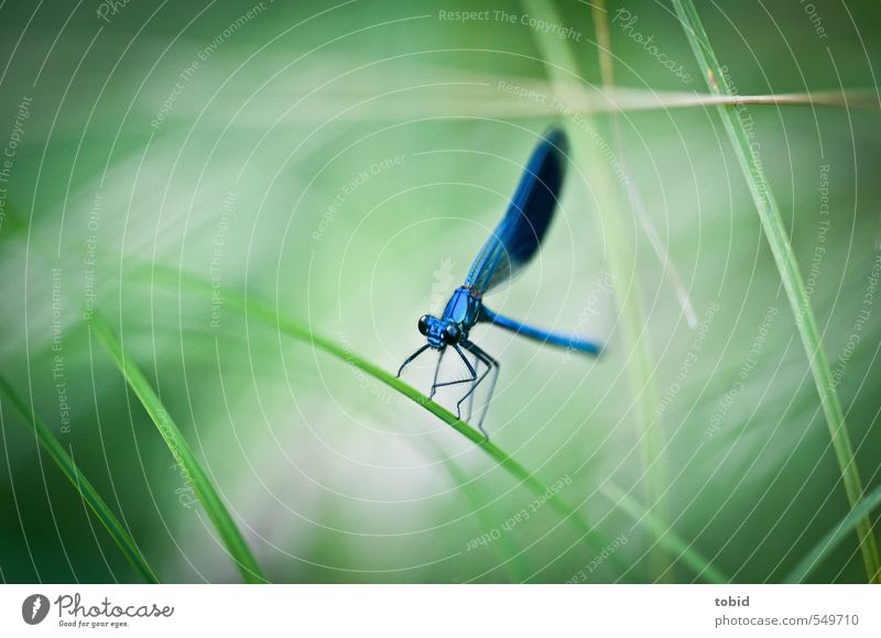 ready for take off Nature Grass Animal Wing Dragonfly 1 Crouch Esthetic Glittering Natural Beautiful Elegant Colour photo Exterior shot Macro (Extreme close-up)