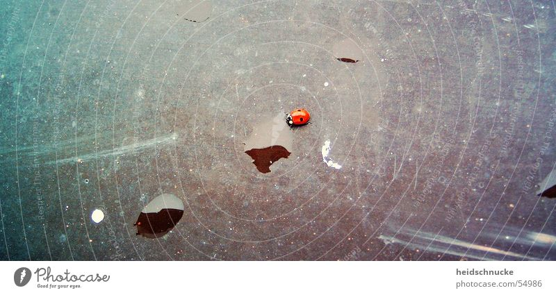 Red Black Animal Happy Insect Ladybird Beetle