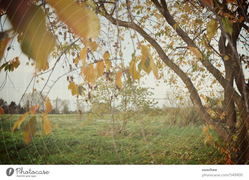 after the autumn came the ... Environment Nature Landscape Sky Autumn Climate Weather Tree Grass Leaf Field Idyll Branchage Exterior shot Autumnal Colour photo