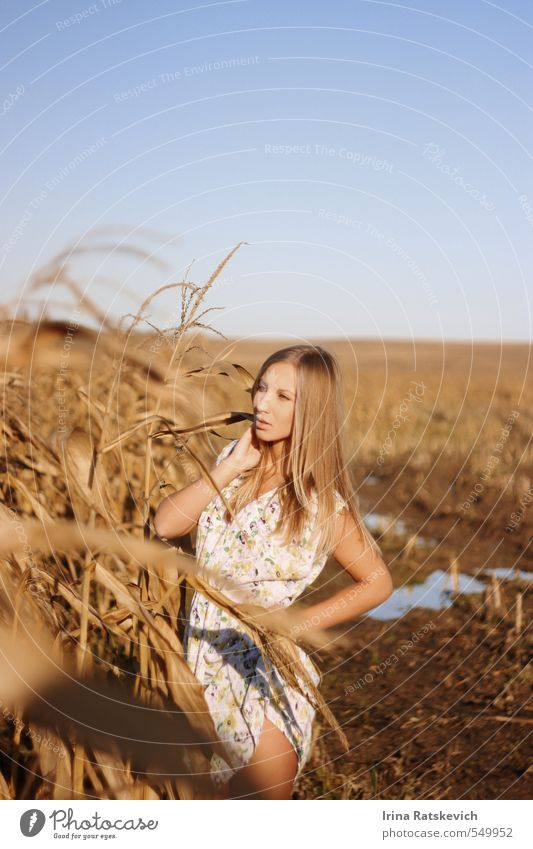 girl on the cornfield Human being Sky Youth (Young adults) Beautiful Hand Young woman Landscape 18 - 30 years Face Adults Autumn Hair and hairstyles Natural