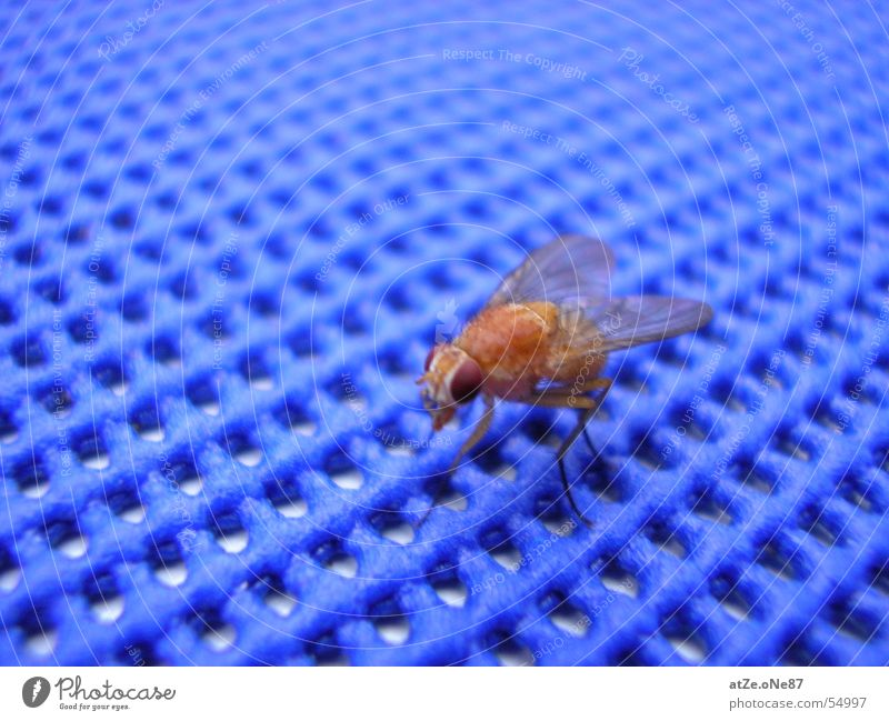 ...the fLieGe Close-up Grating Fly Flying Blue Net nice