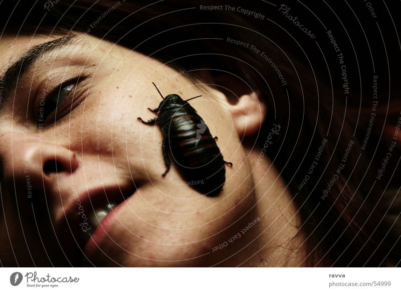 cockroach Bow Cockroaches Oriental cockroach Insect Woman face female black-beetle