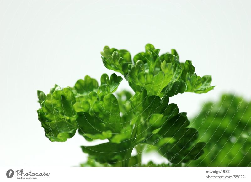 Healthy green Colour photo Studio shot Close-up Detail Macro (Extreme close-up) Copy Space top Isolated Image Neutral Background Deep depth of field Food