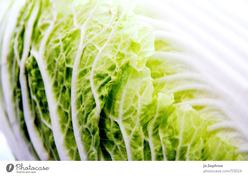 MADE IN CHINA Pak choy Chinese cabbage Vegetarian diet Cabbage Lettuce Salad Vegetable Organic produce Food photograph Healthy Eating Vegan diet vegetarian diet