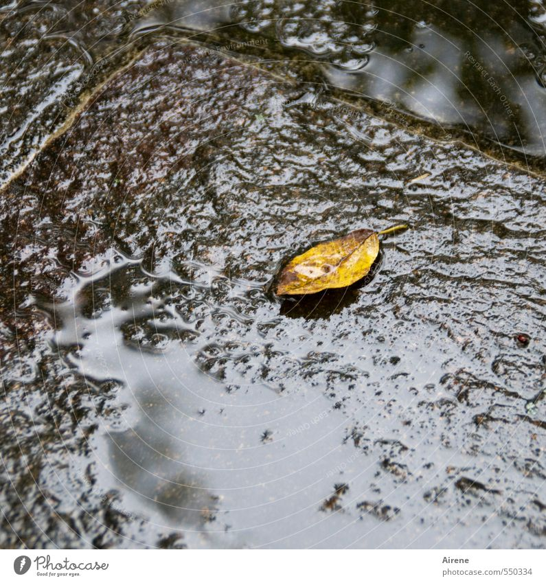 Nature Water Plant Loneliness Leaf Yellow Dark Cold Autumn Lie Brown Rain Glittering Wet Drops of water Simple