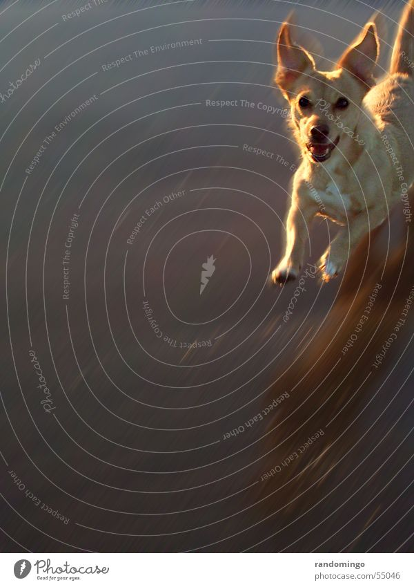 rubia Dog Animal Jump Come Expectation Reflection Exterior shot Edge Silhouette Motion blur Movement Dynamics from the right Looking Haircut