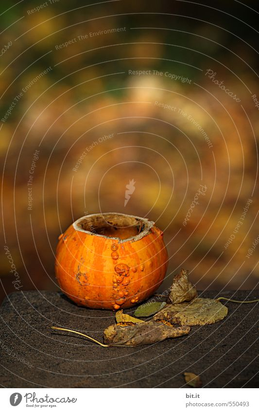 Nature Calm Leaf Autumn Feasts & Celebrations Garden Leisure and hobbies Glittering Living or residing Decoration Candle Symbols and metaphors Fragrance