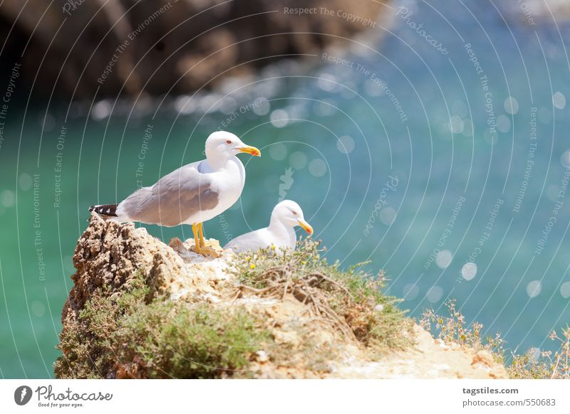 Nature Vacation & Travel Ocean Relaxation Calm Travel photography Coast Freedom Natural Rock Idyll Tourism Card Bay Paradise Heavenly