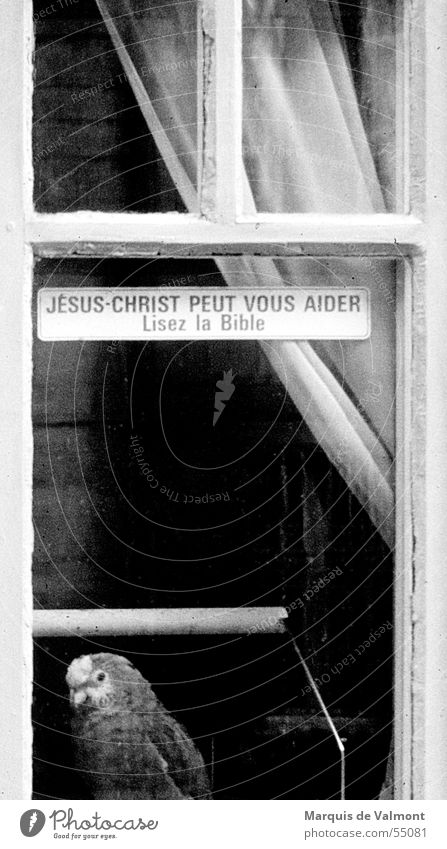 Read the Bible! Window Window transom and mullion Drape Curtain Insight Bird Parrots Cage Bird's cage Black White Label France Religion and faith Belief Crazy