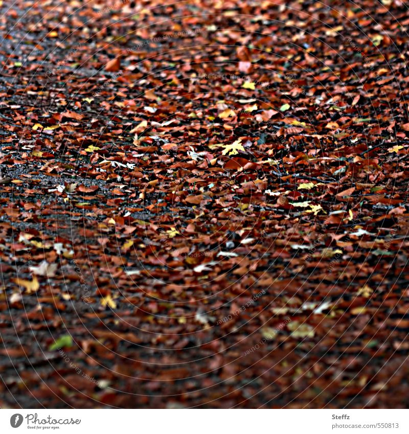 Autumn leaves rustling on the forest floor Noise of the leaves Autumnal leaf rush autumn walk Hissing warm brown hues Woodground melancholically