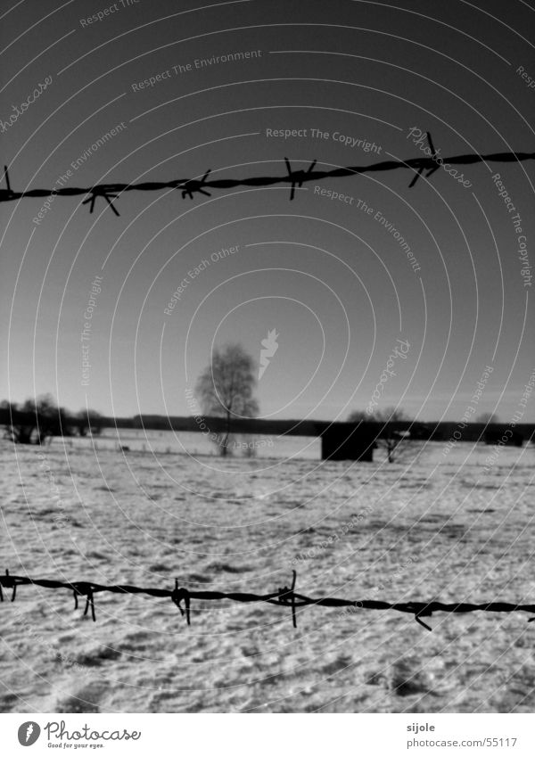 Fenced Barbed wire Winter Cold Snowscape Barn Tree Wire Black White Landscape Hut Sky Black & white photo Ice