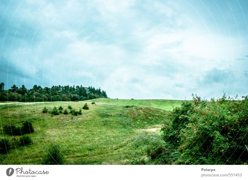 Countryside Sky Nature Plant Blue Heaven Green Beautiful Colour Summer Tree Sun Landscape Clouds Environment Spring Meadow