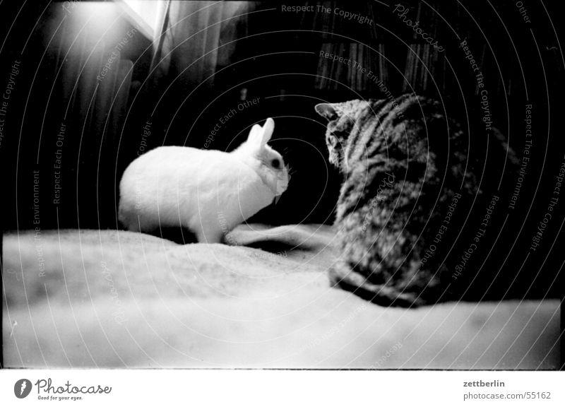 meetings Animal Fur-bearing animal Cat Hare & Rabbit & Bunny Encounter Compromise Looking Meeting 2 Interior shot Black & white photo Domestic cat Date