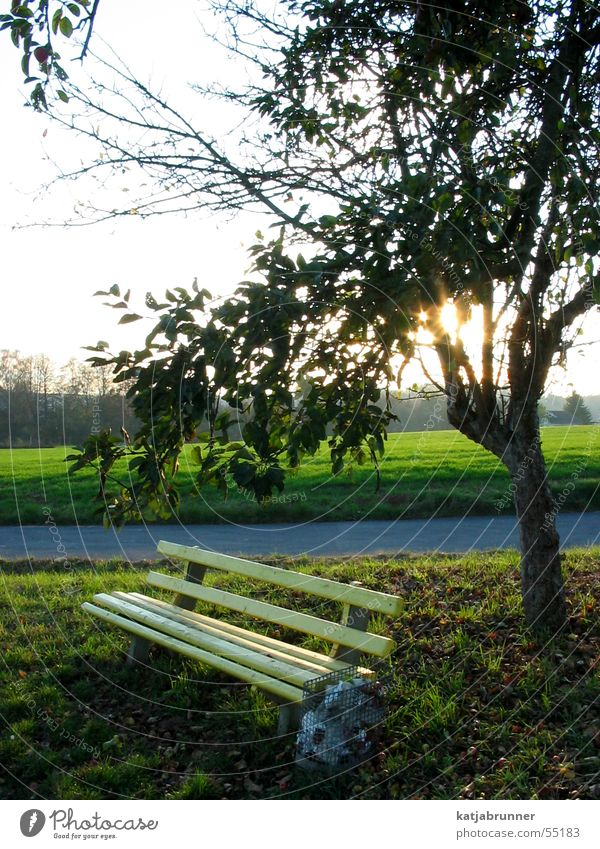 Lonely in the sunset Park bench Tree Sunset Footpath Bench To go for a walk
