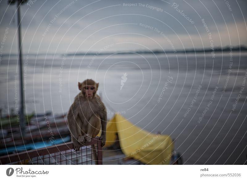 Sky Water Calm Animal Cold Think Moody Sit Wild animal Observe River Curiosity Serene Watchfulness Brash Monkeys