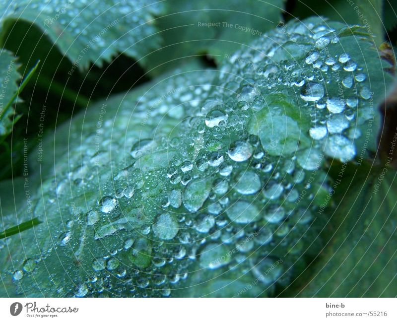 Dew drops in winter Plant Foliage plant Drops of water Wet Flower Leaf Winter Cold Comfortless Reflection Rain Rope Water ants Morning Near Precipitation