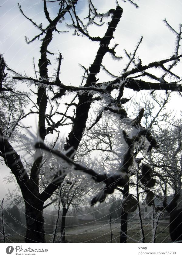 ice needles Cold Winter Thorny Ice Frost Hoar frost