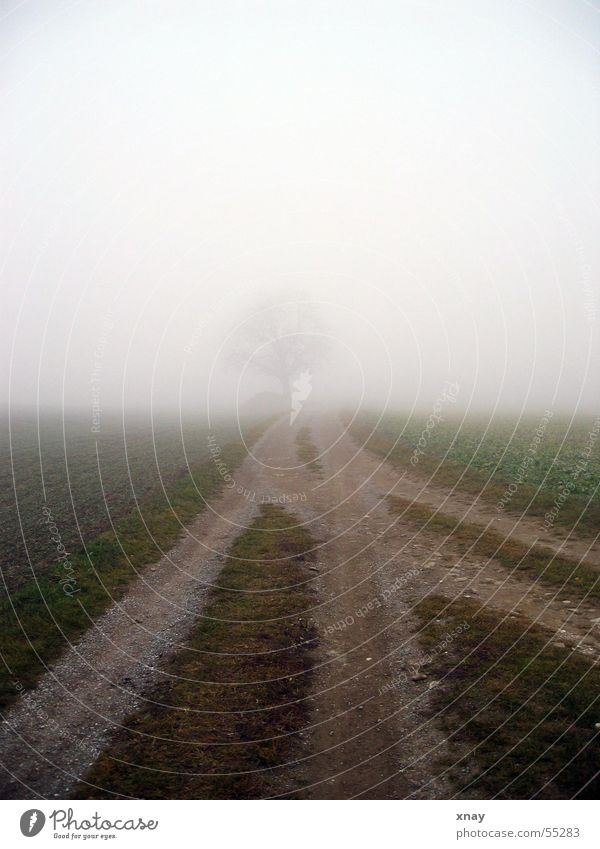 Tree Loneliness Cold Fog Footpath