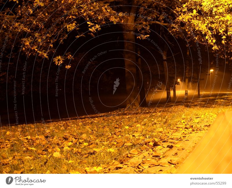 Tree Loneliness Autumn Orange Comforting Heilbronn
