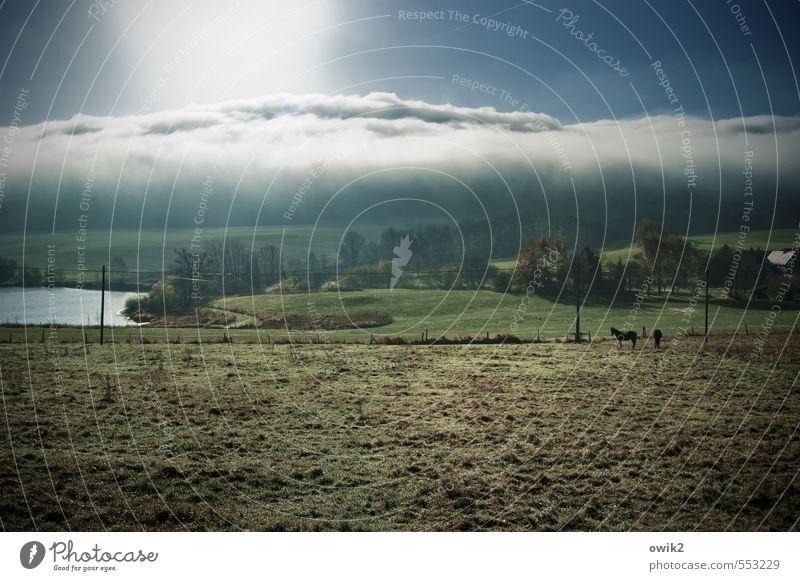 duvet Environment Nature Landscape Plant Animal Sky Clouds Horizon Climate Weather Beautiful weather Tree Grass Bushes Meadow Pond Pasture Farm animal Horse 2