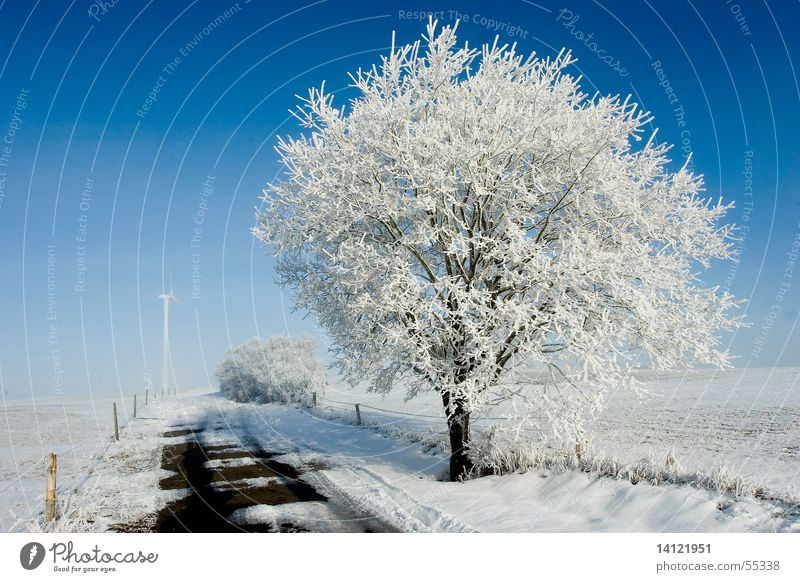 chill Winter White Cold Tree Snow Sky Blue