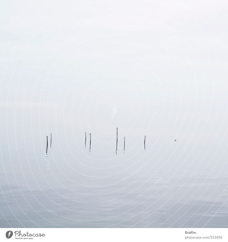 fog Autumn Winter Bad weather Fog Waves Coast Ijsselmeer Bird Seagull Cold Blue White Calm Loneliness Surrealism Infinity Reflection Minimalistic Colour photo