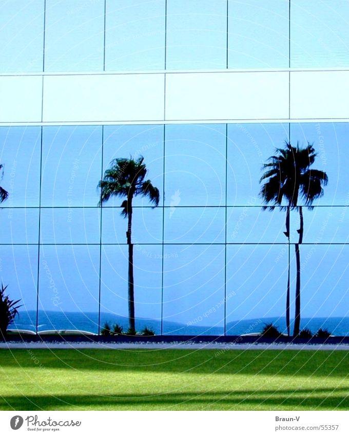 glass-palms Window Palm tree Meadow Ocean Reflection Coast Green Glass Blue Sky