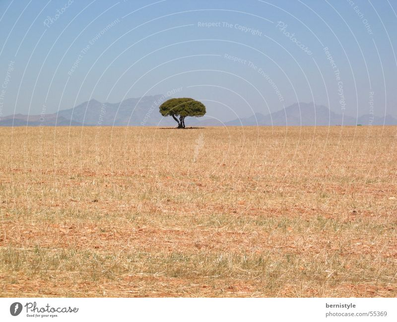 lonely tree Tree Summer Dry Loneliness Exterior shot Landscape Mountain Bright clear Cloudless sky