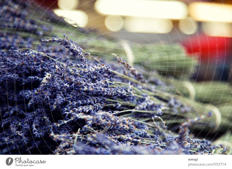 lavender Herbs and spices Lavender Work and employment Gardening Trade Markets Fragrance Natural Violet Colour photo Exterior shot Close-up Deserted Day