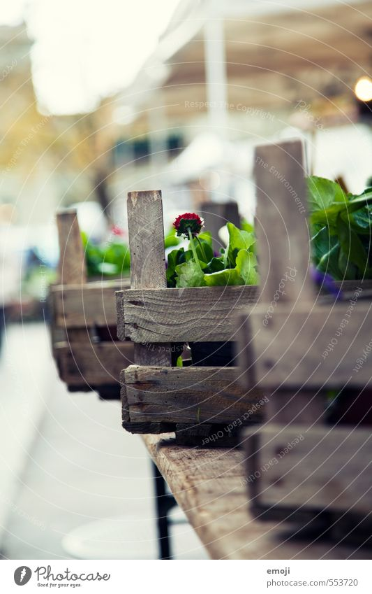flower boxes Environment Nature Plant Flower Foliage plant Natural Green Crate Floristry Markets Market stall Colour photo Exterior shot Deserted Day