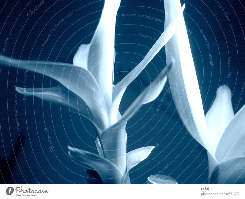 White Flower Green Blue Plant Ice Bright Room Frozen Easy Flashy Bamboo stick