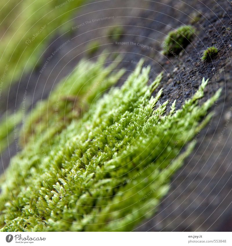 force of nature Plant Climate Moss Aggression Green Black Nature Survive Conquer Overgrown Crawl Cover up Colour photo Exterior shot Close-up Detail Deserted