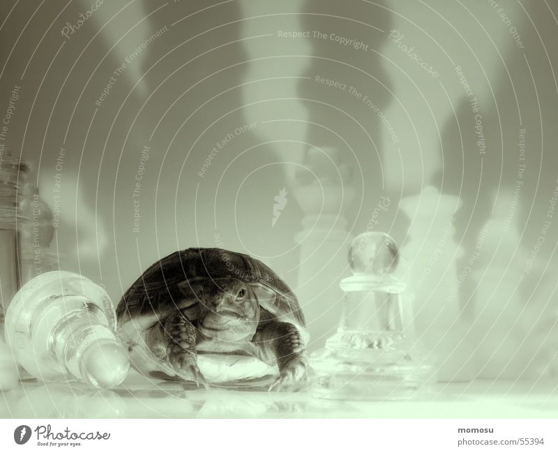 Playing Chessboard Reptiles Turtle Toys