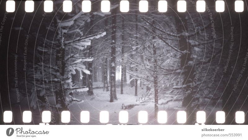 those winters Nature Winter Ice Frost Snow Snowfall Tree Forest Dark Cold Loneliness Analog Eerie servant ruprecht Black & white photo Exterior shot Lomography