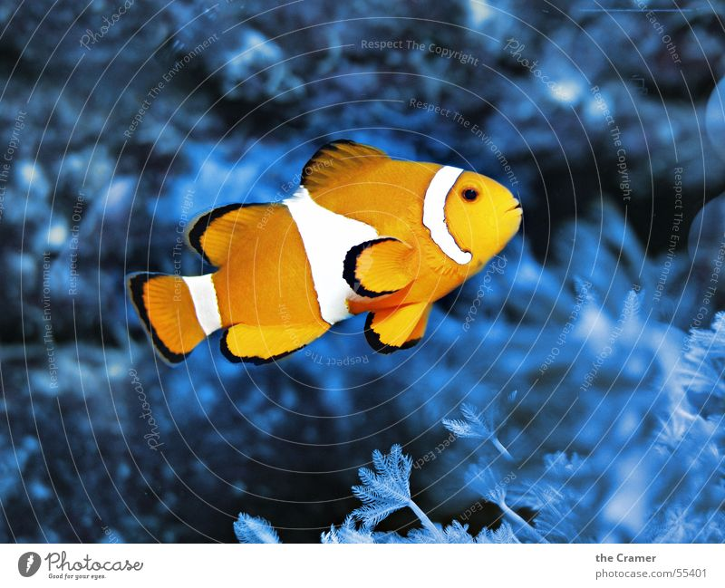 Water Ocean Blue Animal Lamp Cold Warmth Orange Fish Physics Zoo Cinema Aquarium Clown Signal Coral