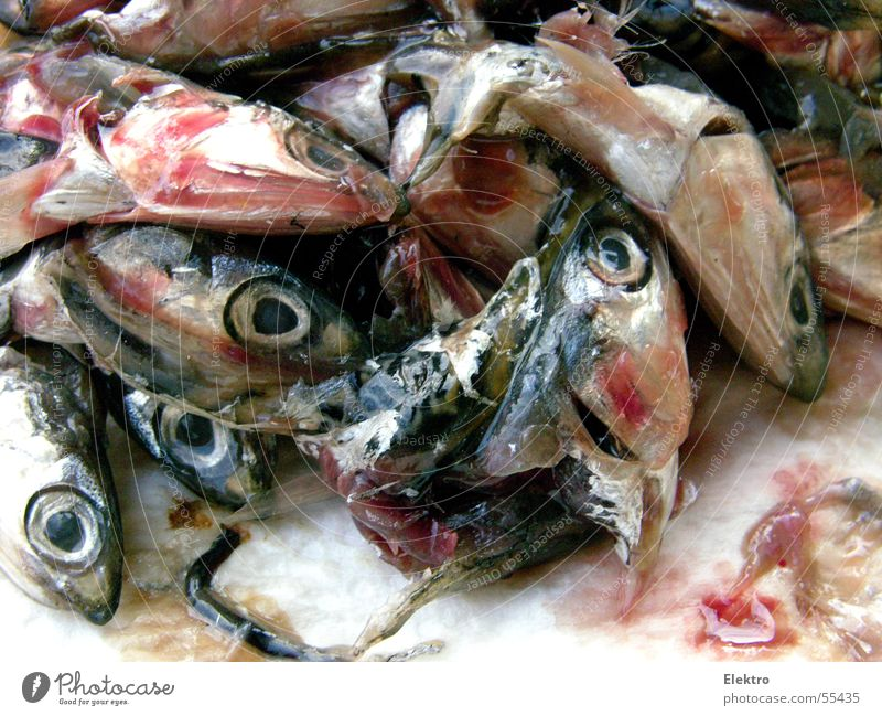 Fish stinks from the head Head Fish head Fishy Eyes Looking Sardine Nutrition Fresh Maritime Fish market Thaw Fishery Fisheye Heap Many Dead animal