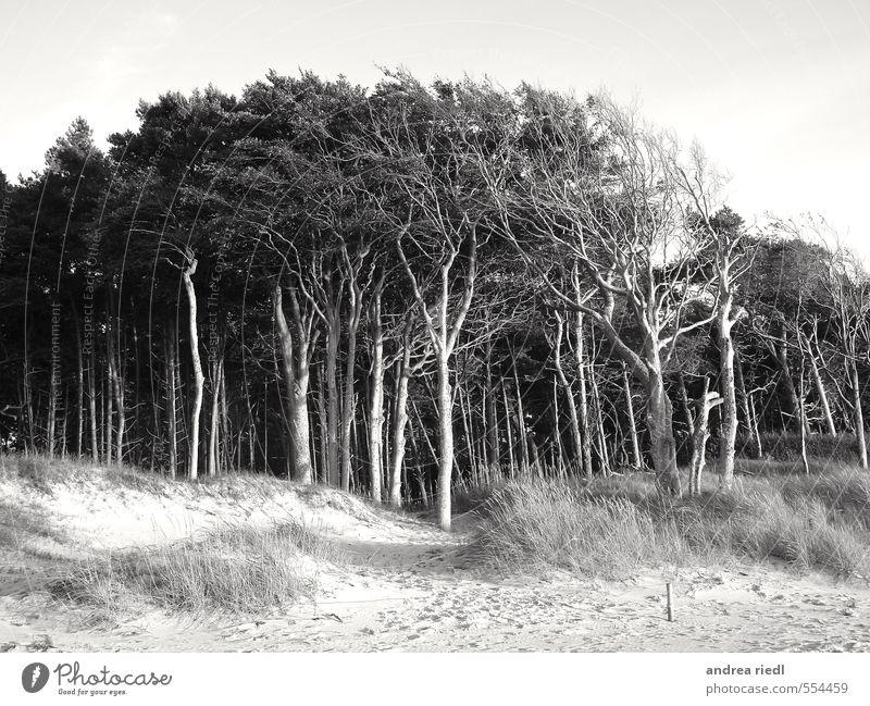Nature Vacation & Travel Water Plant Summer Tree Ocean Landscape Beach Environment Autumn Grass Coast Spring Wood Sand