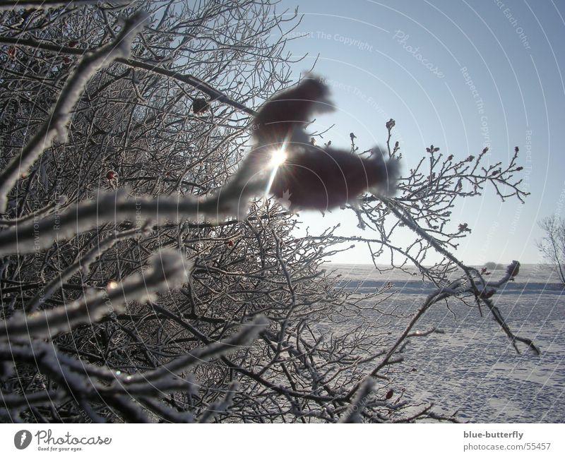 Nature Sun Red Joy Winter Snow Freedom Bushes Rose Thuringia