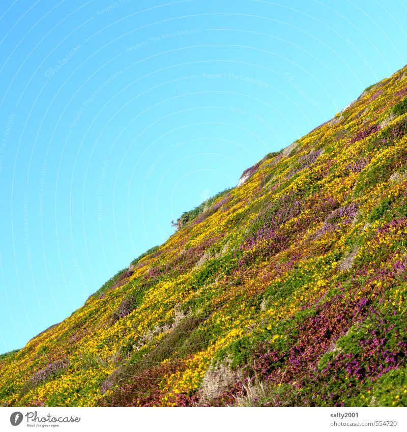 Nature Plant Relaxation Loneliness Landscape Environment Natural Bushes Hiking Beautiful weather Esthetic Blossoming Hill Cloudless sky Sustainability Slope