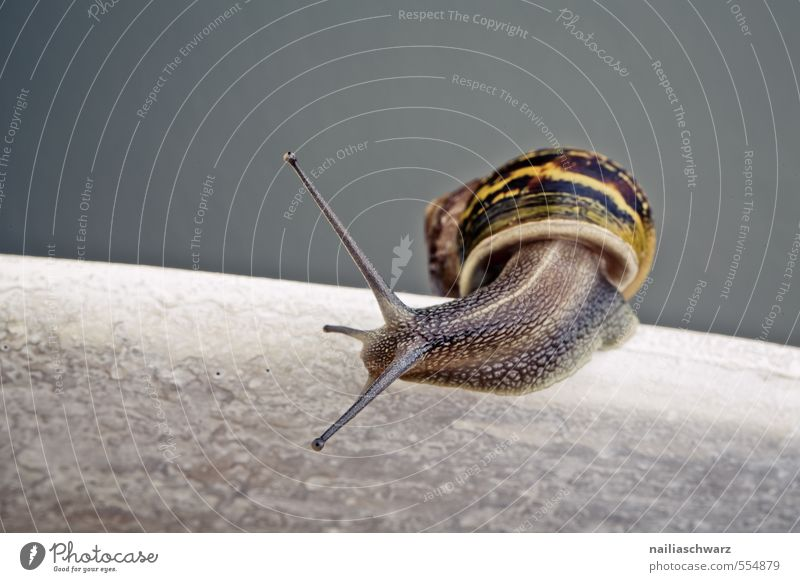 snail Summer Animal Wild animal Snail 1 Stone Line Observe Crawl Running Looking Beautiful Natural Curiosity Cute Yellow Gray Interest Discover checking snails